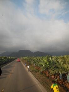 Ecuador: Bananen soweit das Auge reicht