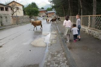 Kühe und Kinder