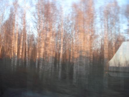 Irgendwo zwischen Moskau und Pskow - hauptsache Birken