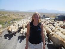 Da wir eh nicht weiterfahren konnte, schnell noch ein Foto mit den Schafen