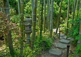 Willkommen in Bambú? Ähm, nope.